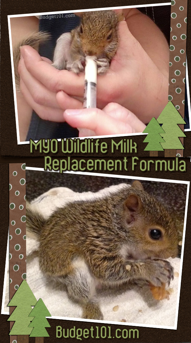 How to MYO Wildlife Milk Replacement Formula for Orphaned Babies