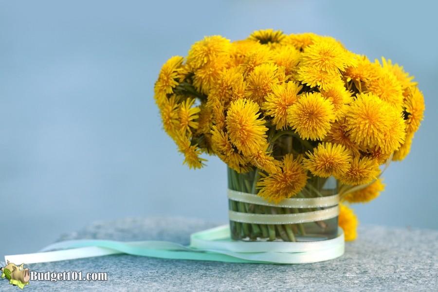 B101-dandelion-flowers