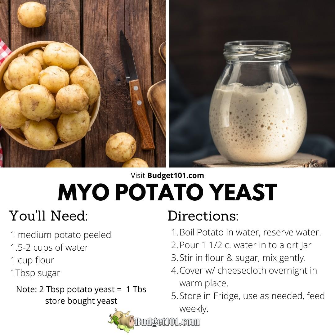 b101-myo-yeast