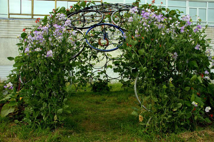 Bicycle Rim Vertical Gardening Dome - Budget101.com