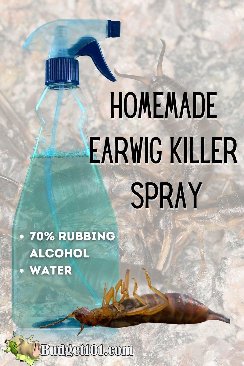 homemade earwig killer spray recipe- kills earwigs instantly