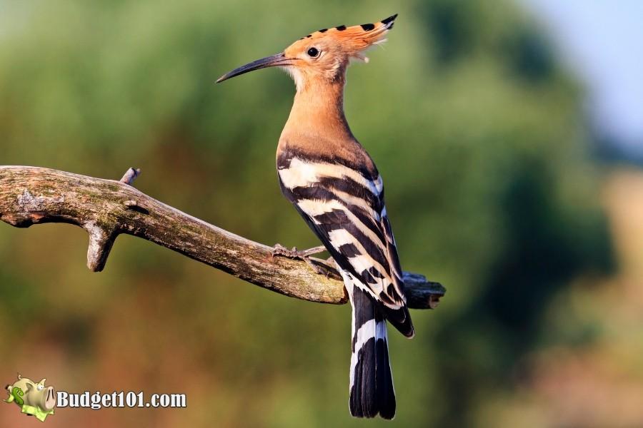 b101-summer-weekend-ideas-birdwatching