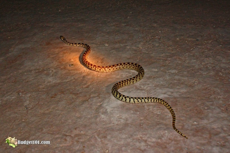 Snakes while camping
