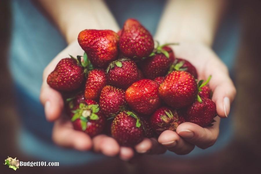 b101-strawberries