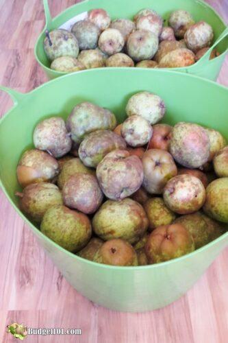 b101 wild pears