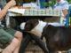 20 people foods dogs shouldnt eat