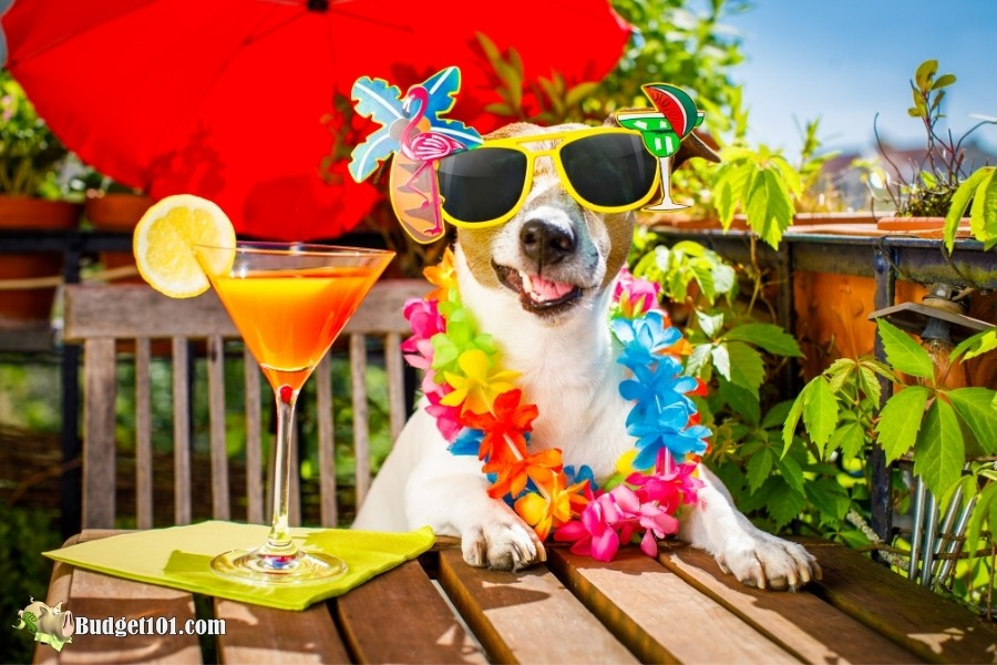 alcohol toxic to dogs