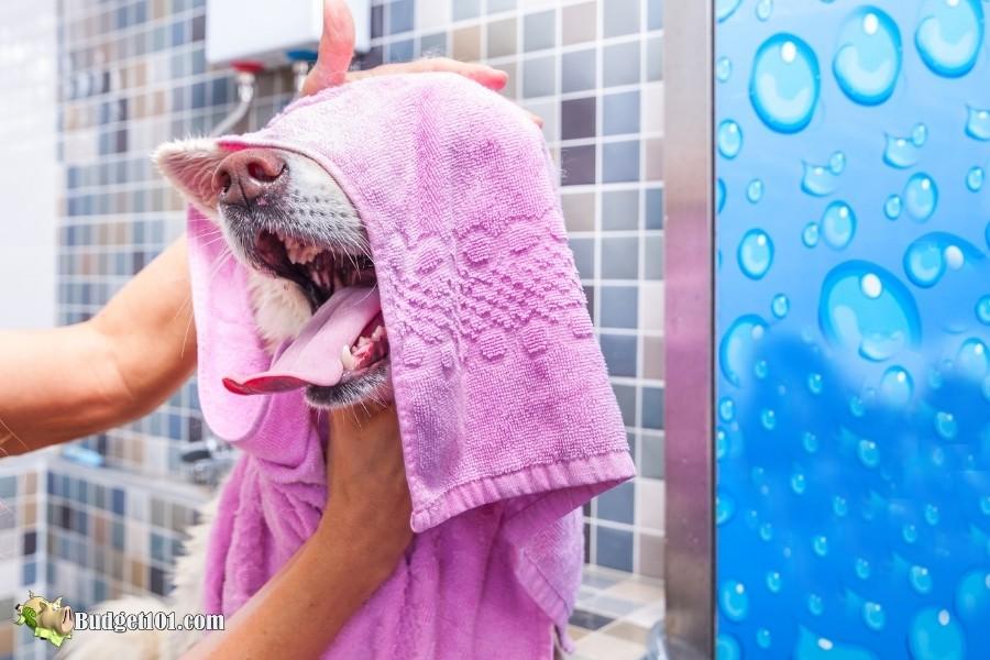 b101 bathing dog