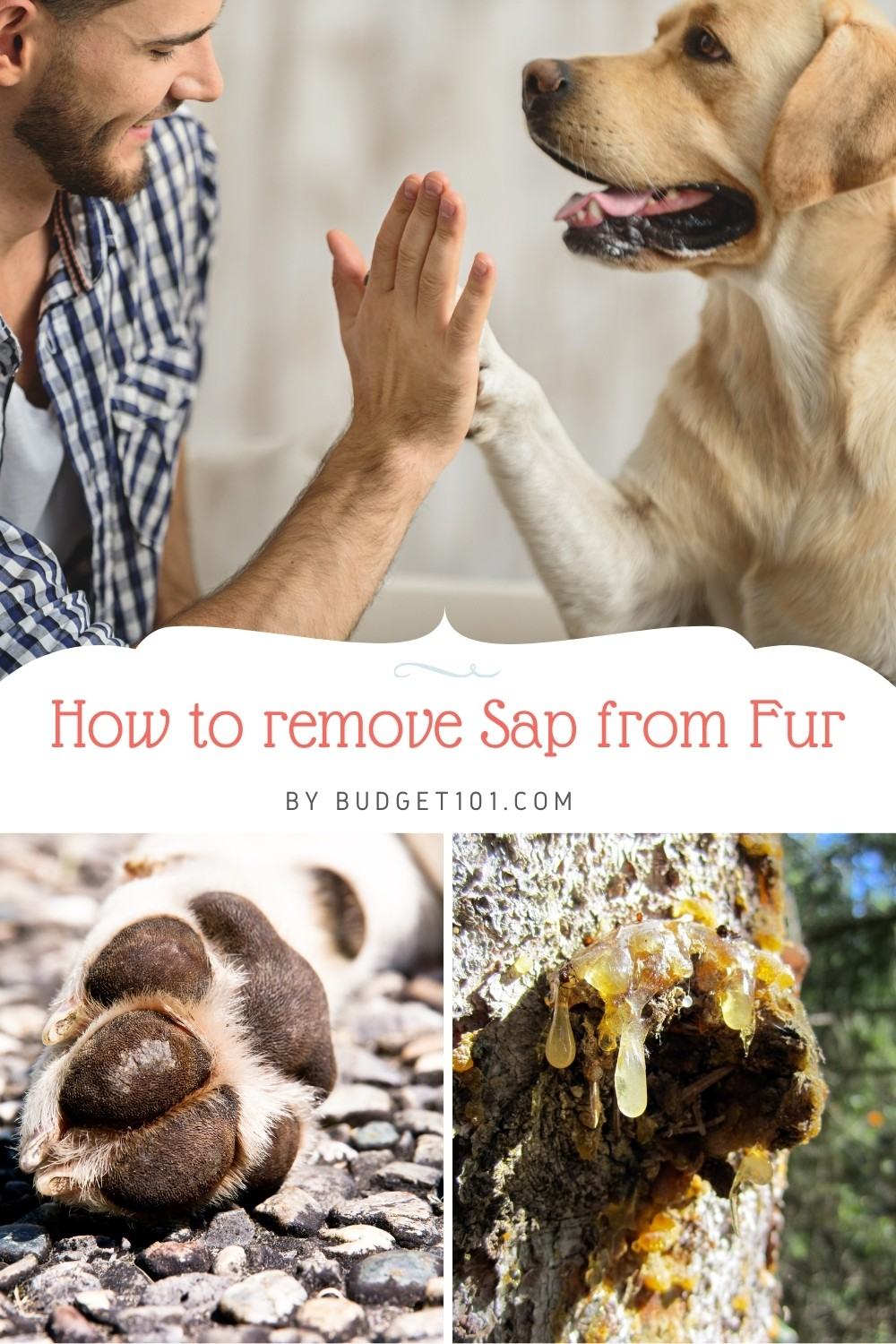 How to painlessly remove tree sap from pet fur and paws #pets #removesap #Budget101 #tipsntricks