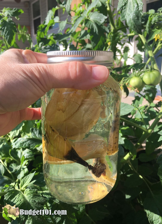 banana peel tomato fertilizer