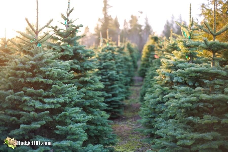 christmas tree farm b101