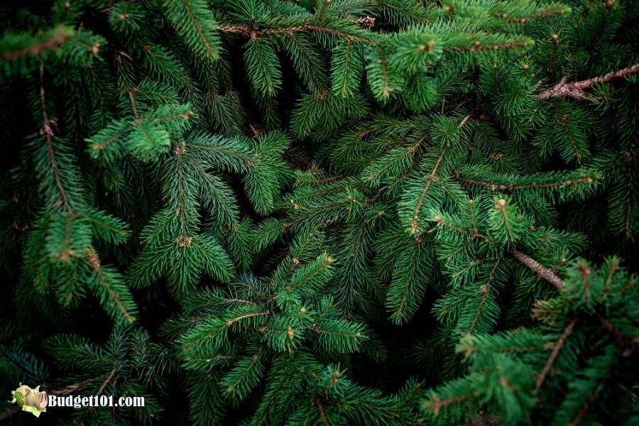 christmas tree needles budget101