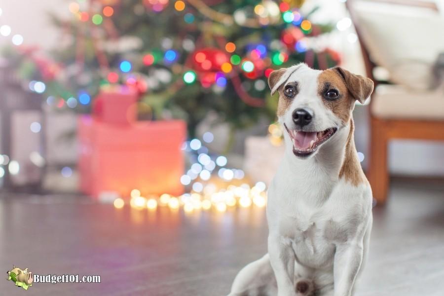 christmas tree pets b101