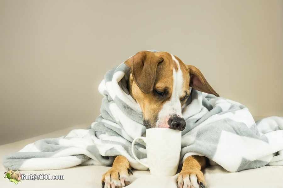 coffee toxic to dogs