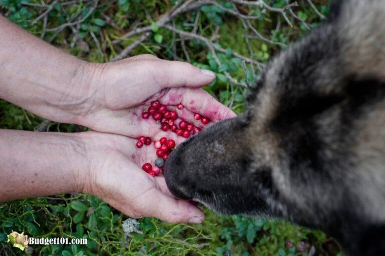 health benefits cranberries for dogs