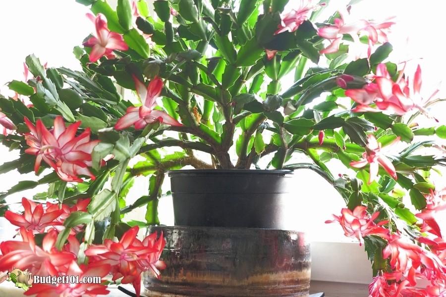 most dangerous plants for pets cactus