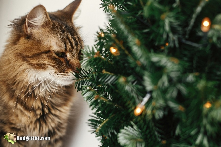 most dangerous plants for pets kitty