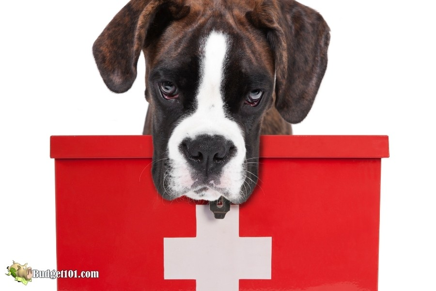 people medicines toxic to dogs