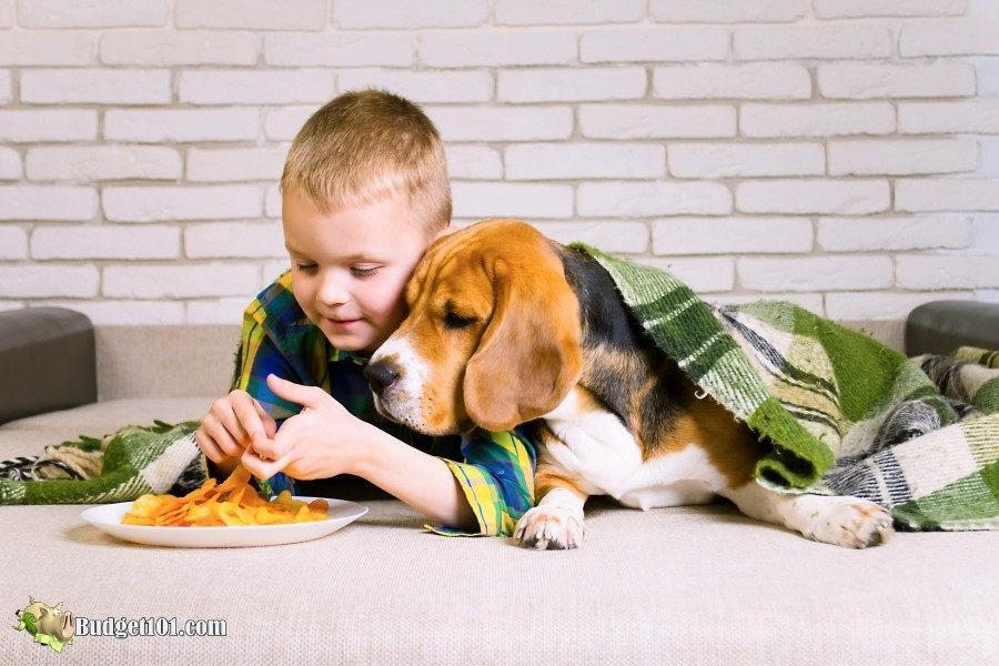 salty snacks toxic to dogs