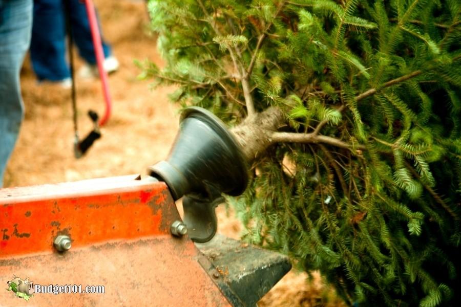 shake christmas tree remove bugs