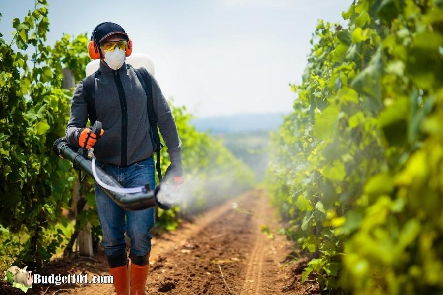 avoiding pesticides budget101