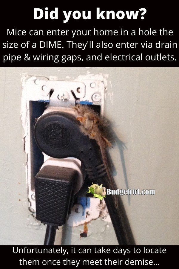 Mice crawl in through electrical & drain pipe gaps to get in your house