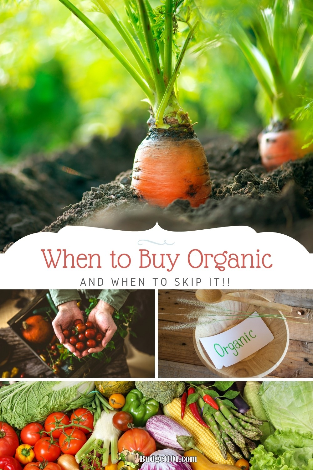 Tired of wasting money on groceries? Learn when to buy organic, and when you should skip it! From the dirty dozen to the clean fifteen, here's how to save on organic produce #Budget101 #Organic #GrowOrganic #BuyOrganic #DirtyDozen #Clean15
