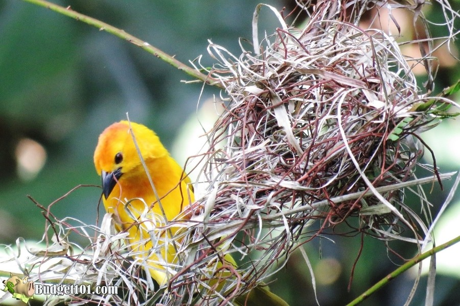 attract birds with nesting materials