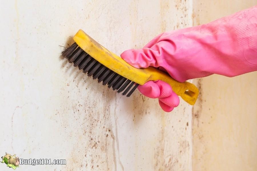 cleaning mildew