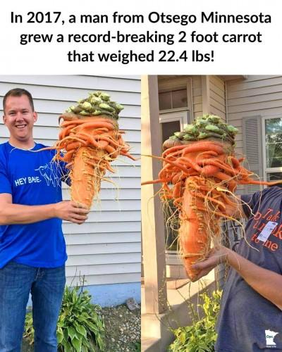 fun fact carrot
