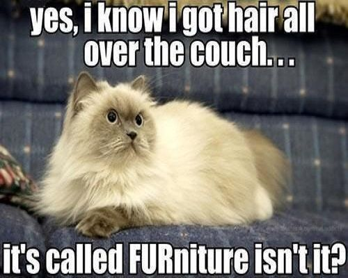 Pet hair on couch = FURniture