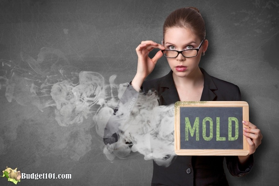 get rid of mold smell budget101