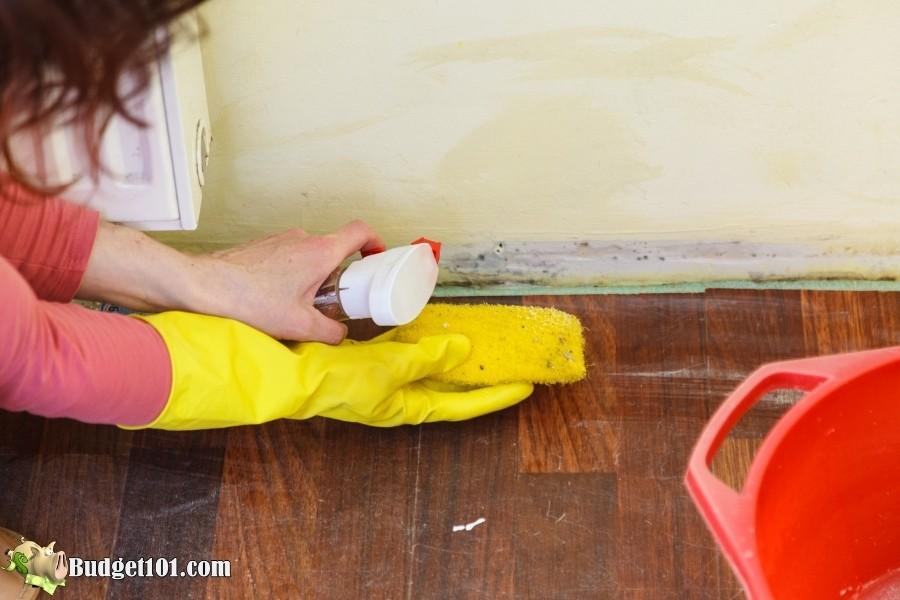homemade mold cleaner