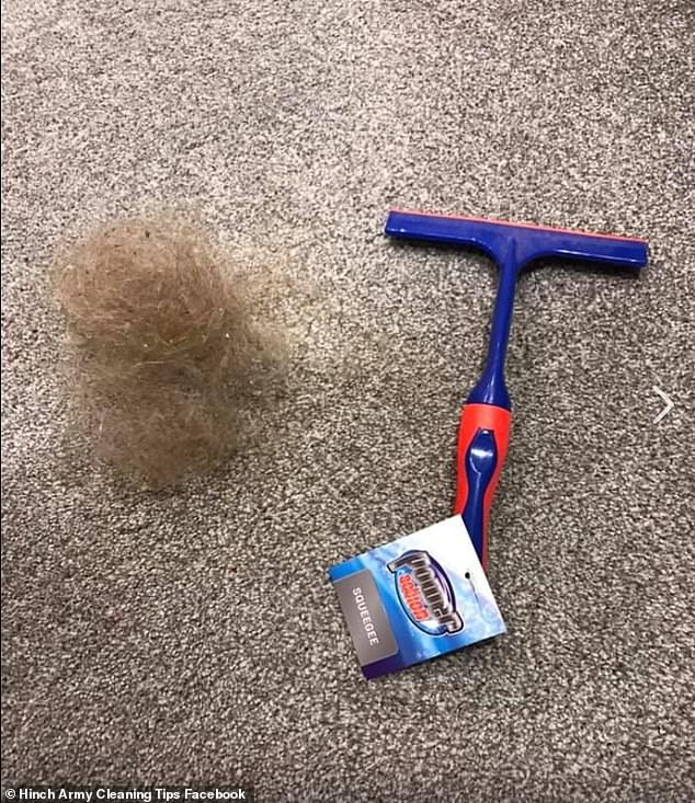 remove hair from carpeting with squeegee