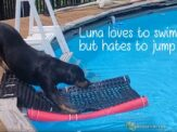 How to Make a Pool Ladder for Dogs