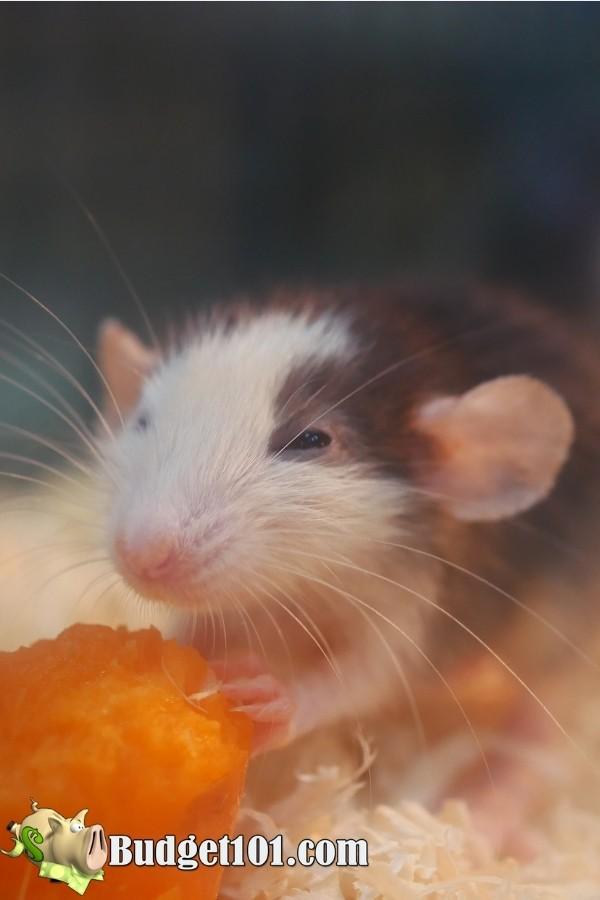 sweet potato kills mice