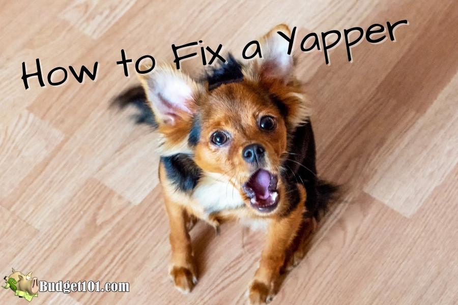 stop yapbox dog from barking