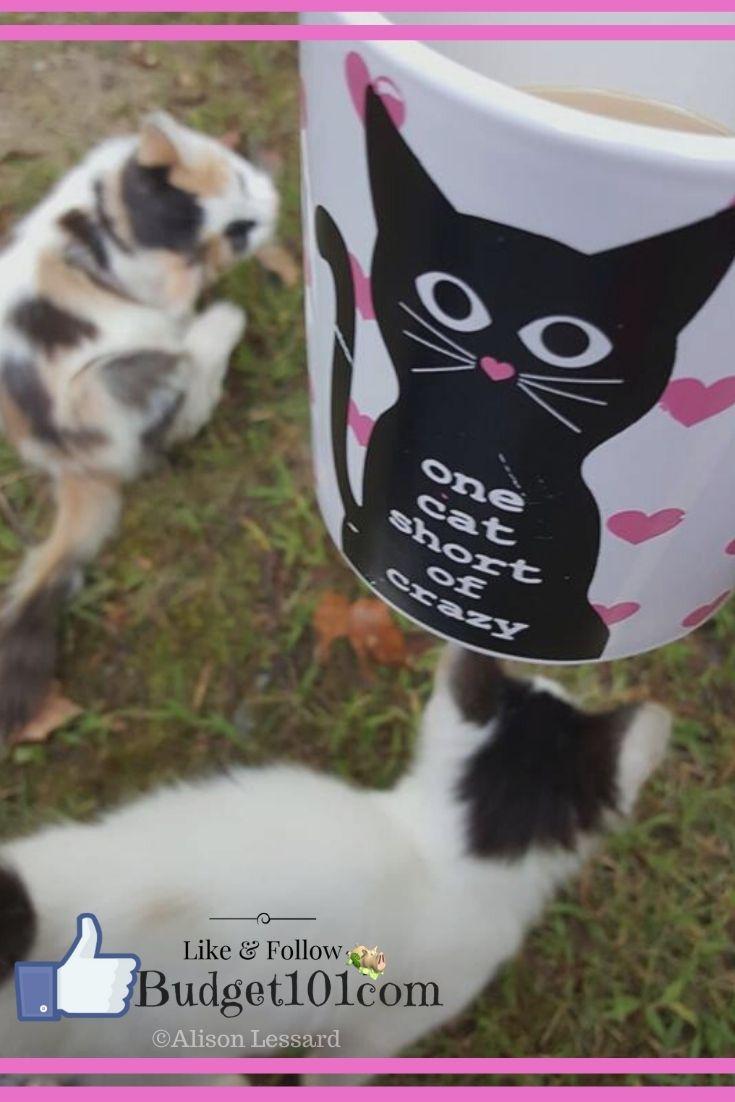 b101 one cat short of crazy meme