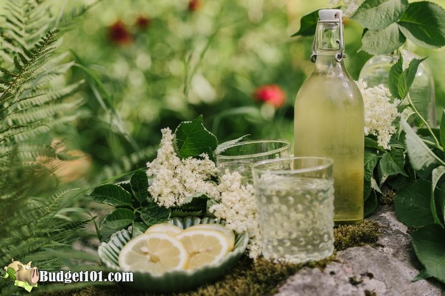 elder flower cordial ingredients 2