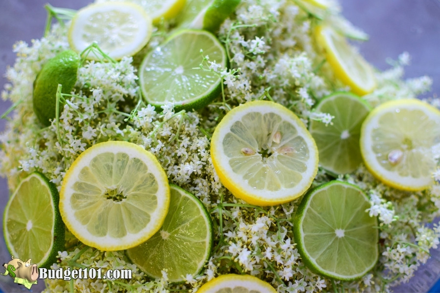 elder flower cordial ingredients